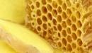 فوائد العسل مع الزنجبيل