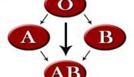 كيف اعرف فصيلة دمي ؟