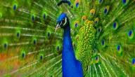 أجمل مخلوقات الله