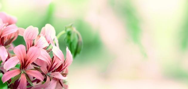 تصنيف النباتات الزهريه